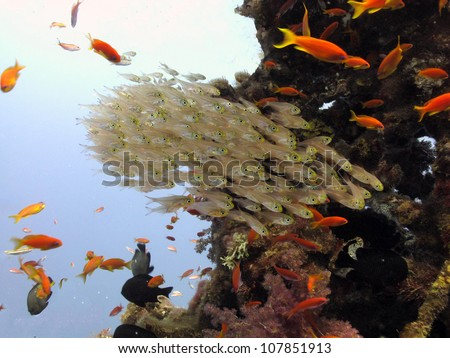 Group of glassfished in the blue - stock photo