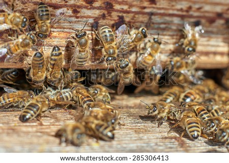 Group of honeybees in front of a beehive - stock photo