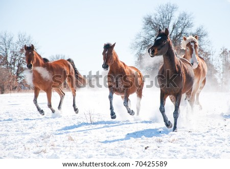 Group of horses charging in snow towards the viewer - stock photo