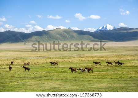 Group of horses grazing in mountains - stock photo