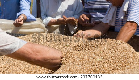 Group of human hands checking wheat grain in trailer after harvest in the field - stock photo