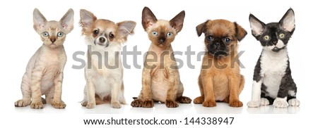 Group of kitten and puppies posing on a white background - stock photo