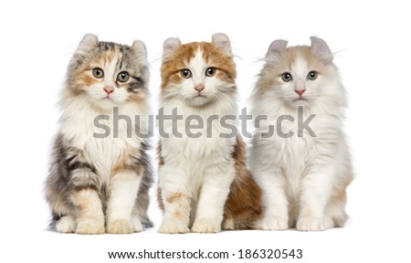 Group of Kittens - stock photo