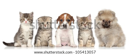 Group of kittens and puppies posing on a white background - stock photo