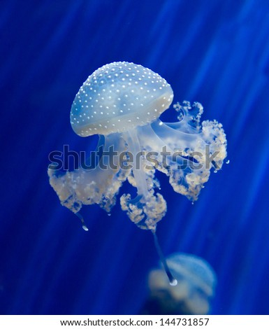 Group of light blue jellyfish - stock photo