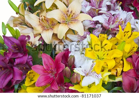 Group of Lilly  Isolated on White - stock photo