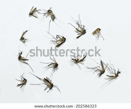 Group of Mosquito dead isolated on white background - stock photo