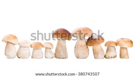 group of mushroom, isolated on white - stock photo