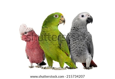 Group of parrots - stock photo