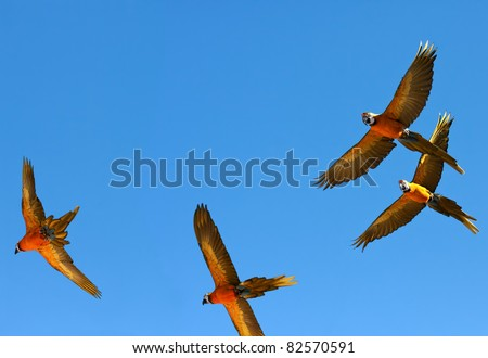 Group of parrots is flying on  backgrounds of sky. - stock photo