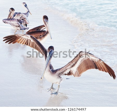 group of pelicans - stock photo