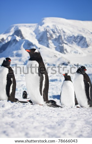 group of penguins having fun in the snowy hills of the Antarctic - stock photo