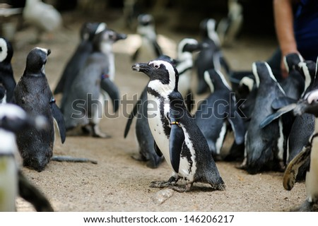 Group of penguins in a zoo - stock photo