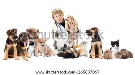 Group of pets and veterinary - stock photo