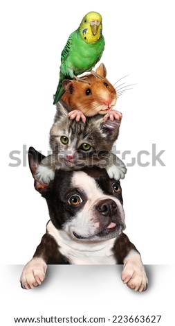 Group of pets concept as a dog cat hamster and budgie standing on top of each other as a symbol for veterinary care and support or pet store design element for advertising and marketing on white. - stock photo
