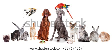 Group of pets isolated on white background - stock photo