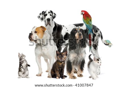 Group of pets standing in front of white background, studio shot - stock photo