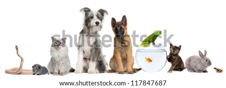 Group of pets with dog, cat, rabbit, ferret, fish, frog, rat, bird, guinea pig, reptile, snake against white background - stock photo
