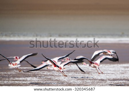 Group of pink flamingos flying over a lake close to the Eduardo Avaroa National Park in Bolivia - stock photo