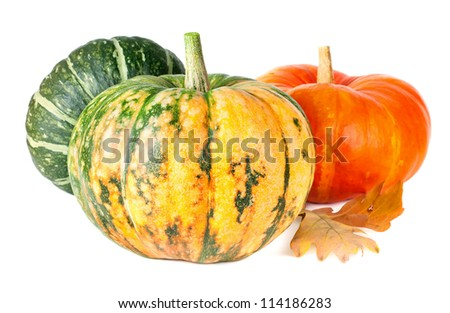 Group of pumpkins isolated on white background - stock photo