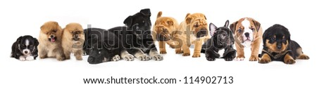 Group of  Puppies of different breeds - stock photo