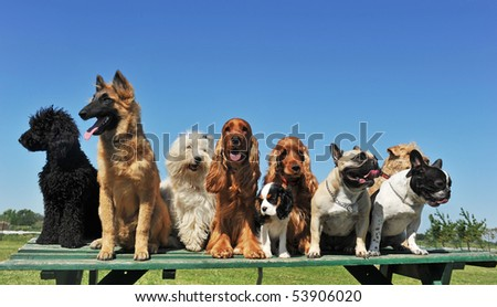group of puppies purebred dogs on a table - stock photo