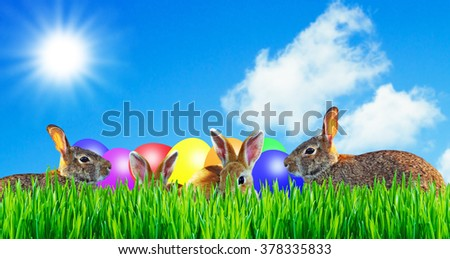 Group of rabbits with easter eggs - stock photo