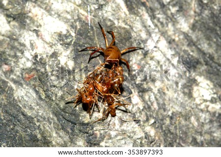 Group of reds ant & prey - stock photo