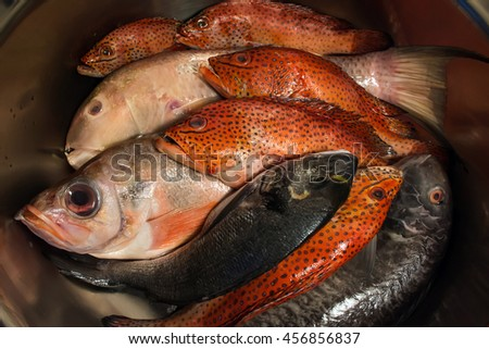 Group of sea fishes with red coral grouper, sea bass and dorado in a steel round kitchen sink, top view, close up - stock photo