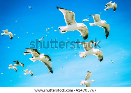 Group of sea gulls against a blue sky with clouds - stock photo
