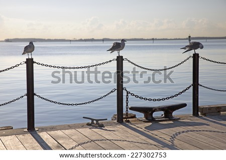 Group of seagull birds perching on Miami posts   - stock photo