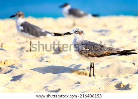 Group of seagulls on sandy beach against the background of caribbean sea - stock photo