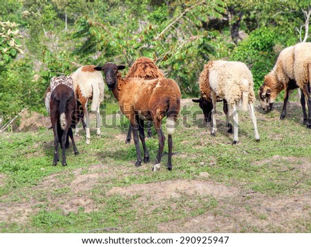 Group of sheep grazing in an open meadow - stock photo