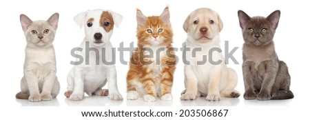 Group of small kitten and puppies are on white background - stock photo