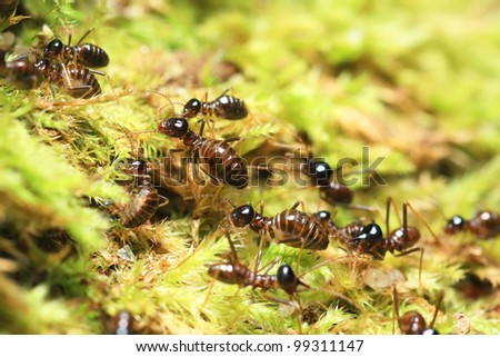 group of soldier termites - stock photo