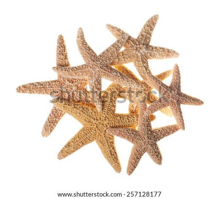 Group of Starfish Isolated on White Background - stock photo