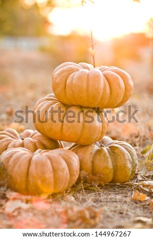 group of sunny beautiful pumpkins - stock photo