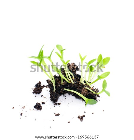 Group of the beginnings in soil on white background - stock photo
