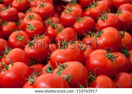 Group of tomatoes - stock photo