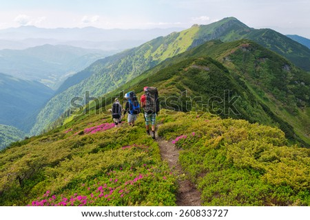 group of tourists walking on  flowers  field rhododendron in mountain - stock photo