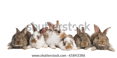 group of young brown and spotted rabbits sitting in a row isolated on white - stock photo