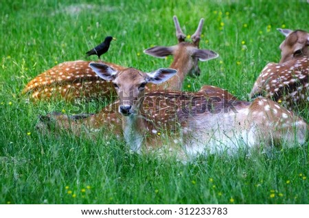 Group of young deers on a green grass in a forest in summer. - stock photo