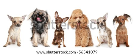 Group of young dogs, isolated on a white background - stock photo