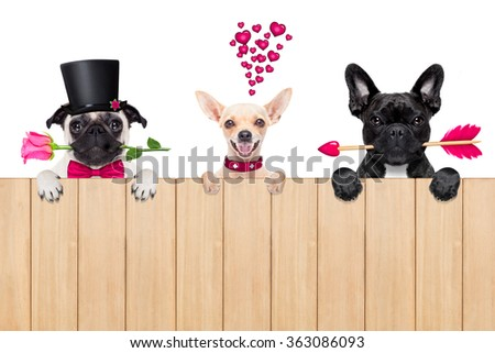 group, row or team of dogs around valentines banner or placard, isolated on white background - stock photo