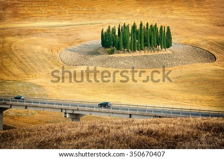 Grove of cypress in the Italian Tuscany. - stock photo