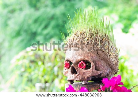 Grow green wheat seedling on head of skull - stock photo