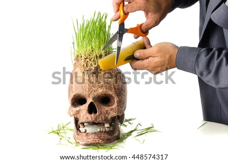 Grow green wheat seedling on head of skull, Skull in Barber shop - stock photo