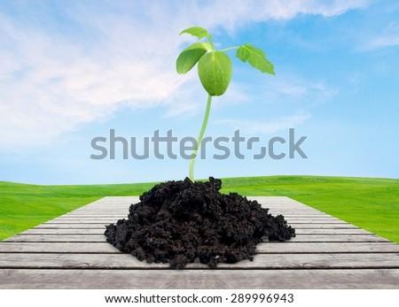 Grow, growing, seed. - stock photo