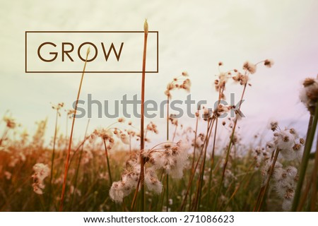 Grow motivational inspiring quote concept with wildflower landscape background. Vintage soft light hipster style. - stock photo