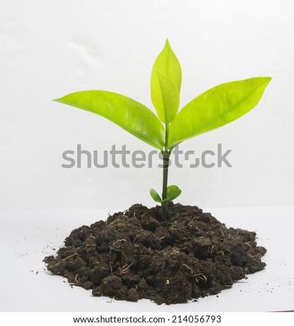 growing - stock photo